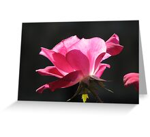Hot Pink, Rose Greeting Card