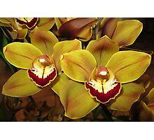 Golden Orchids Photographic Print