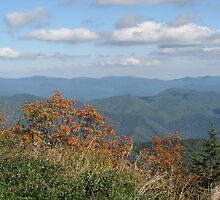 Smokey Mountain National Park, view from Clingmans Dome by NatureGreeting Cards ©ccwri