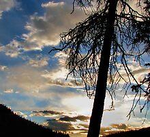 Pine Sunrise by Jen Millard