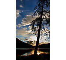 Pine Sunrise Photographic Print