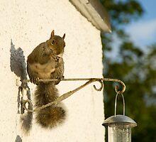 Secret Squirrel Thief 4 by DonDavisUK