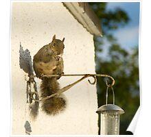 Secret Squirrel Thief 4 Poster