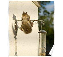 Secret Squirrel Thief 3 Poster