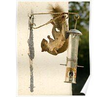Secret Squirrel Thief 2 Poster