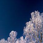 winter trees by imaginaryfriend