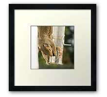 Secret Squirrel Thief 1 Framed Print