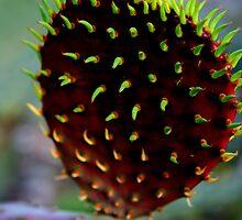 Punk Rock Prickly Pear by Stephanie  Newbold