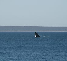 Unexpected arrival- A whale. by elphonline