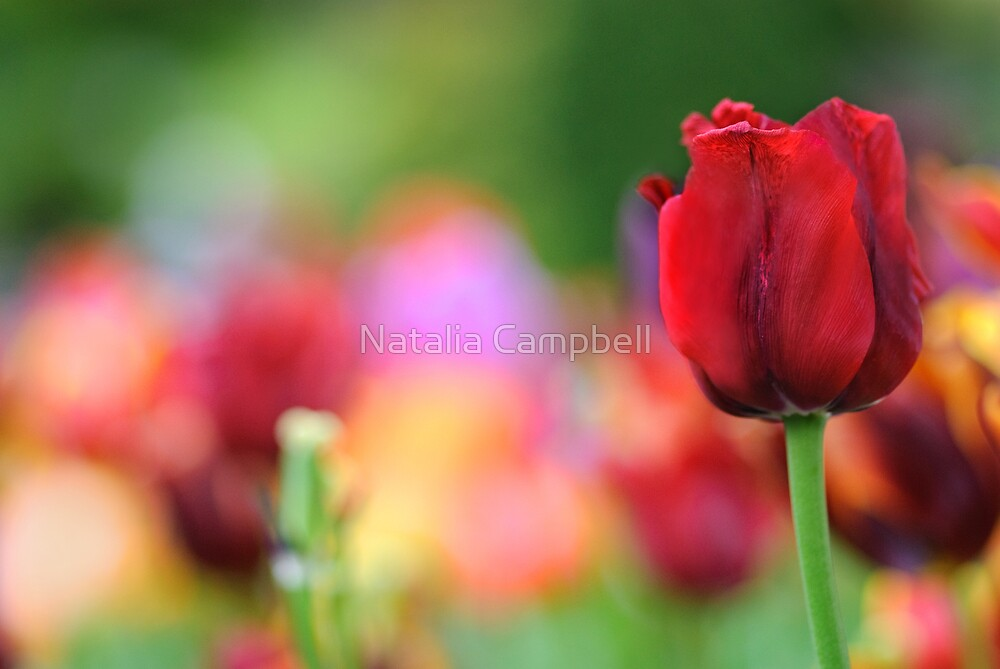 """Spring is nature's way of saying, """"Let's party!"""" by Natalia Campbell"""