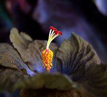 Wallflower Spark by taueva