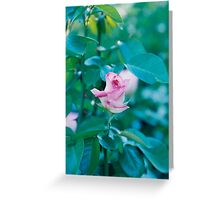 Pink Around The Edges Greeting Card