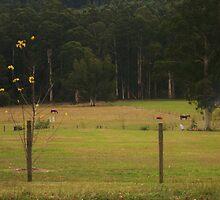 Tending the fields by Eddie Johnson
