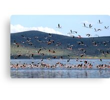 Flight of the Flamingo.....Lake Nakuru....kenya Canvas Print