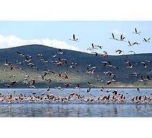Flight of the Flamingo.....Lake Nakuru....kenya Photographic Print