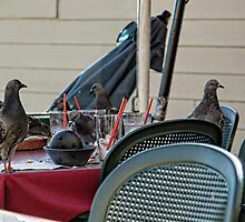 Pigeon Party by CarolM