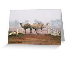 Camels In The Mist Greeting Card