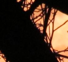 Gumball moon Sticker