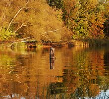 Reflections of Autumn by Lynda   McDonald