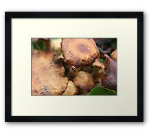 Mr. Beetle frantically searches for his top hat... Framed Print