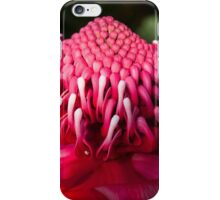 Waratah iPhone Case/Skin