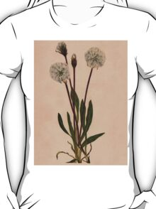 Slender Agoseris-Available As Art Prints-Mugs,Cases,Duvets,T Shirts,Stickers,etc T-Shirt