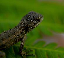 Lizard by ajjj
