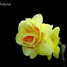Spring Gelb by brotbackgeraet