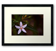 Australian native Framed Print
