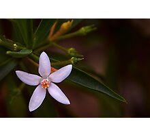 Australian native Photographic Print