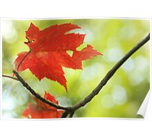 poésie d' automne Poster