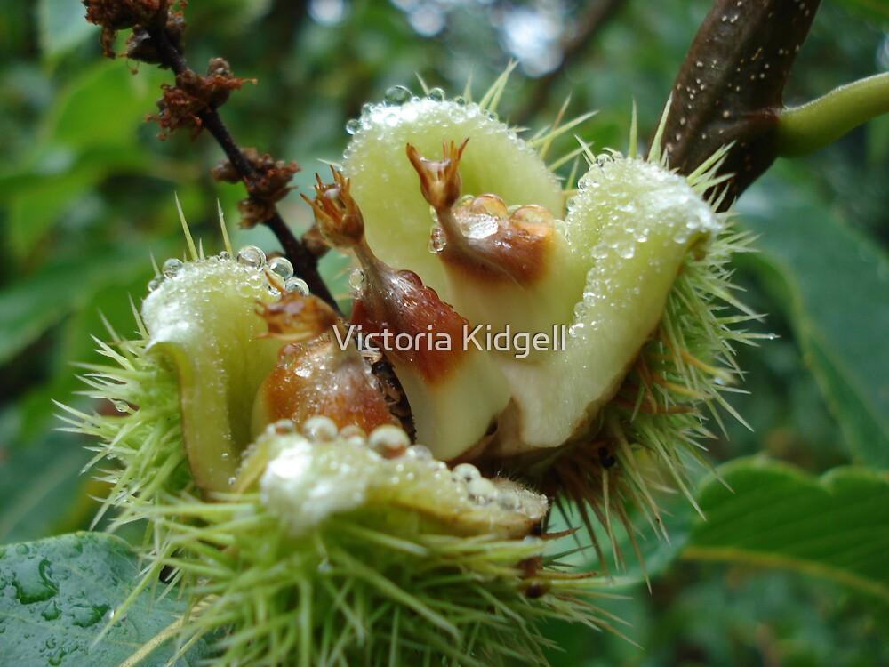 Sweet chestnuts by Victoria Kidgell