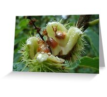 Sweet chestnuts Greeting Card