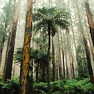 Mountain Ash Forest. by Ern Mainka