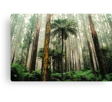 Mountain Ash Forest. Canvas Print