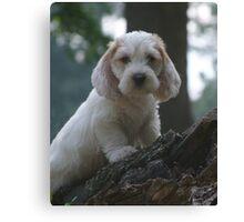 PBGV Puppy Canvas Print