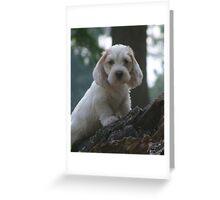 PBGV Puppy Greeting Card
