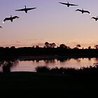 Dawn at Crescent Head, NSW by Normf