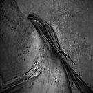 Tree Scarf by Crispin  Gardner IPA