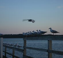 Seagull line-up by styles