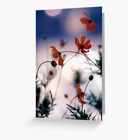 Cosmos flowers and city bokeh, Omotesando, Tokyo Greeting Card