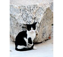 Grecian Kitty Photographic Print
