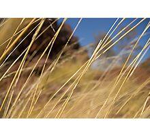 Grass Encounter Photographic Print