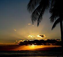 Waikiki Sunset by Stephanie  Newbold