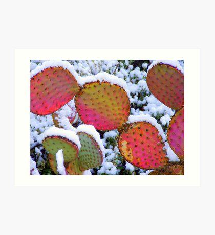 Sonoran Snowfall Art Print