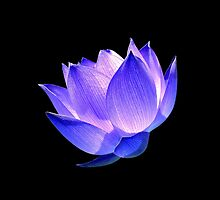 Enlightened by PhotoDream Art