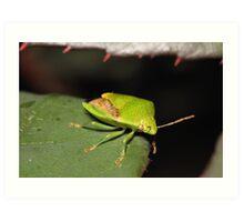 Green Shield Bug Art Print
