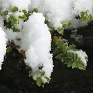 Snow III by Christine Jones