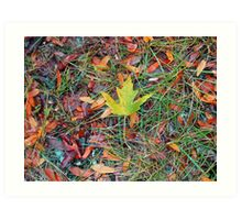 Fall is Coming Art Print