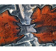 Two leaves fighting Photographic Print